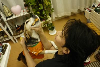 美容鍼灸東京豊島区文京区新宿区口コミ耳つぼダイエット不妊治療