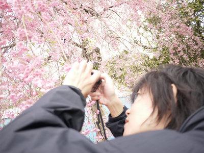 美容鍼灸東京豊島区文京区新宿区耳つぼダイエット口コミモデル