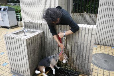 美容鍼灸 東京 豊島区 文京区 新宿区 求人 鍼灸師