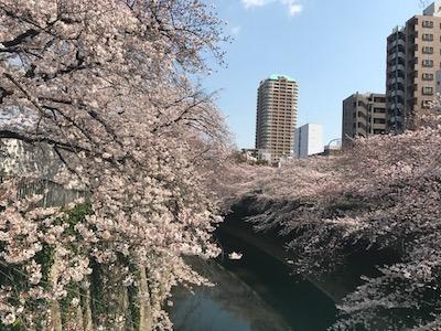 竹田竜太鍼灸整骨院 面影橋桜